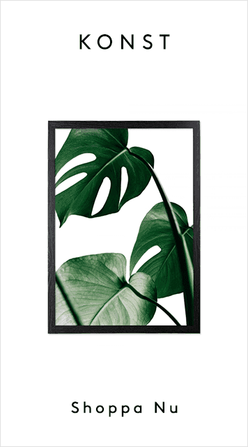 Accessories_Monstera_NB